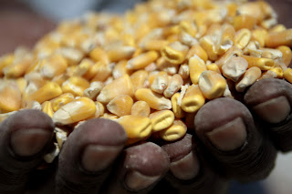 South Africa: fell in corn price was waited