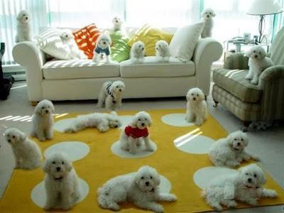 training-puppies