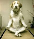 Animales - Salud y Bienestar