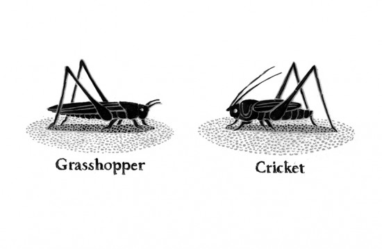 "analysis grasshopper and bell cricket The story ""the grasshopper and the bell cricket"", written by yasunari kawabata,  is a children's fiction story that is written in a third person narrative point of view."