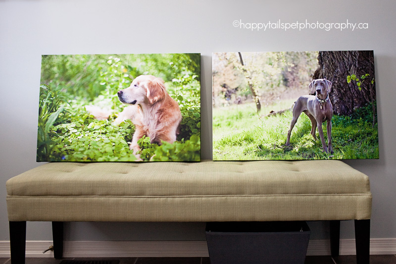 Professional pet photography products: gallery wrap canvases