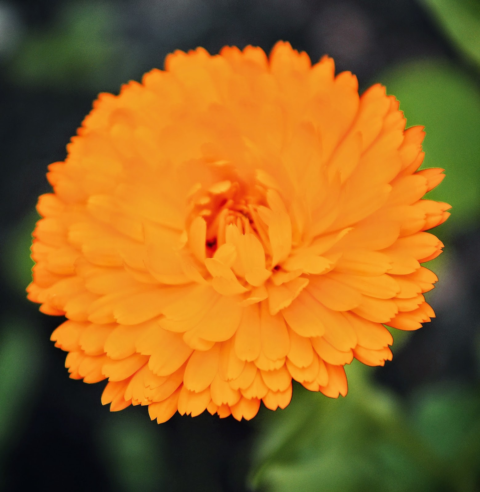 Marigold © Louise Jolley Photography