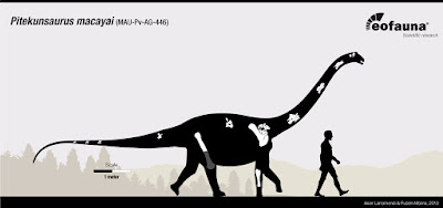 Pitekunsaurus bones