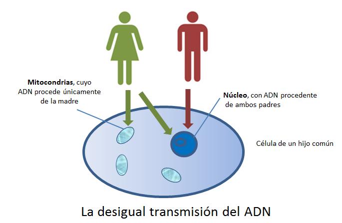 El ADN y nuestra genealogía