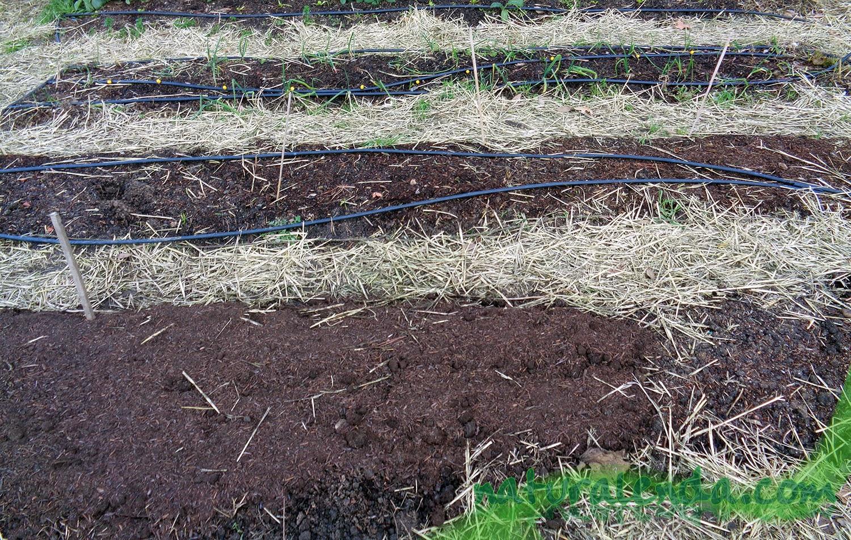 suelo sin plantar