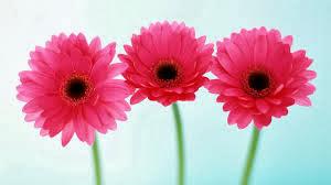 Flowers in Russian