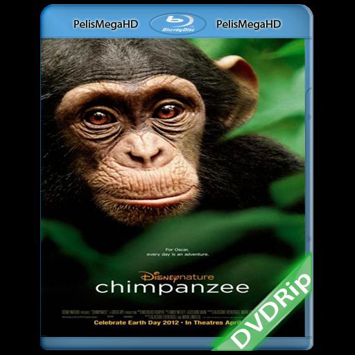 Chimpanzee (2012) DVDRip Español Latino