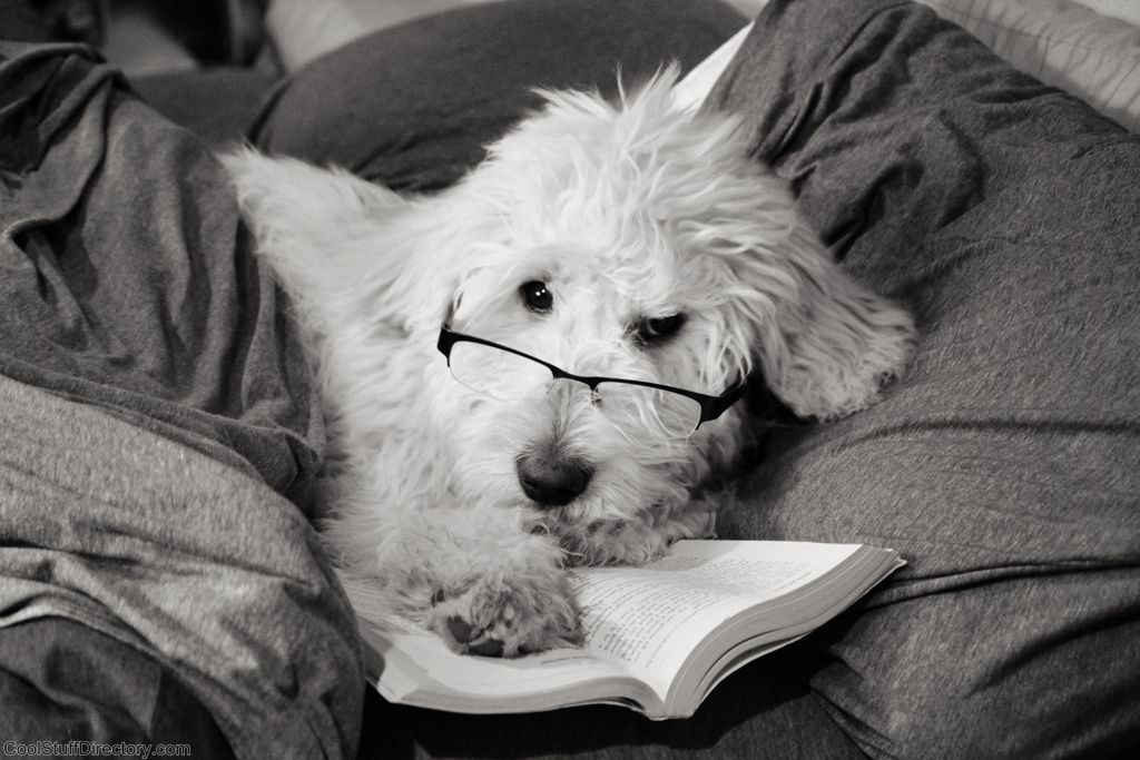 34. Dog Reading Book by Brooke Anderson