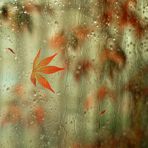 Beautiful rain photography part 2