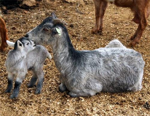 Animalia: Clasificación de los Animales según su Alimentación ...