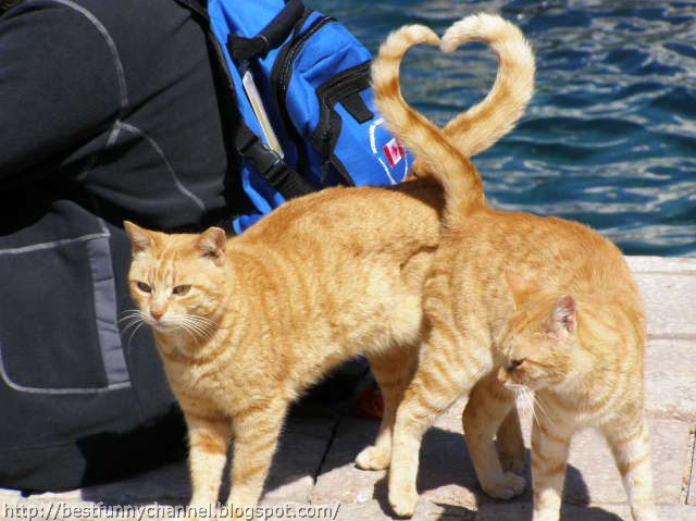 Two cats heart.