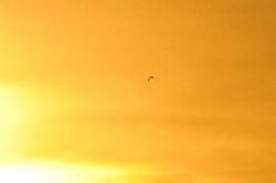 Ein Vogel namens 'Ikarus'...