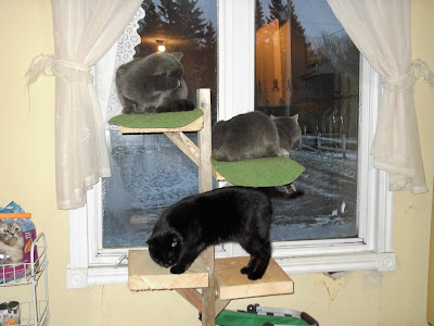 Barn cats sharing a homemade cat tree