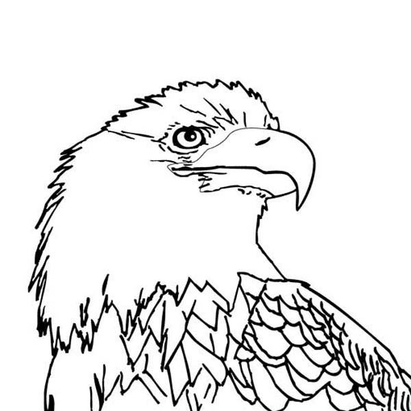 coloring pages eagle coloring pages tulip