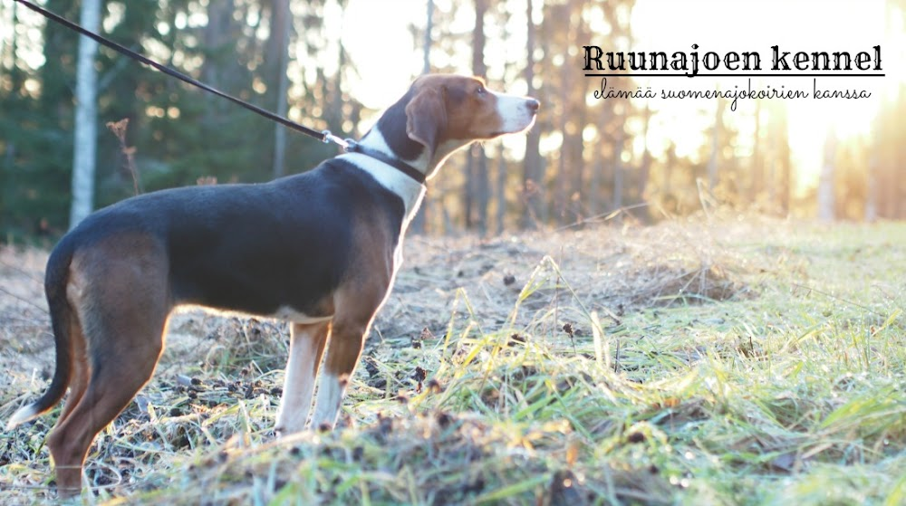 Ruunajoen kennel