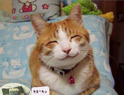 http://2.bp.blogspot.com/-vLF1D4zIGz4/TZMCrOX4rNI/AAAAAAAAAs8/1uRaMQhR52E/s1600/Happy-Smiling-Animals-010.jpg