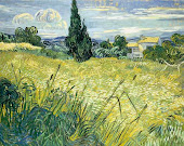 Green Cornfield Van Gogh