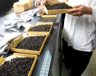 Samples of Fujian's Wuyi Yan Cha being prepared for cupping