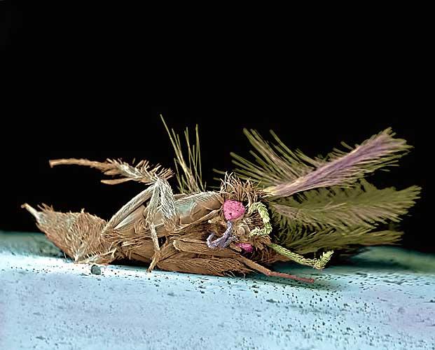 insectos, muertos, accidente, trafico, micrografia