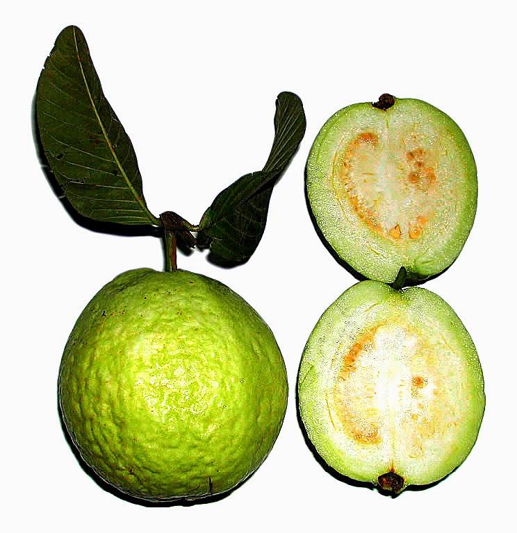 Psidium guajava Φρούτα