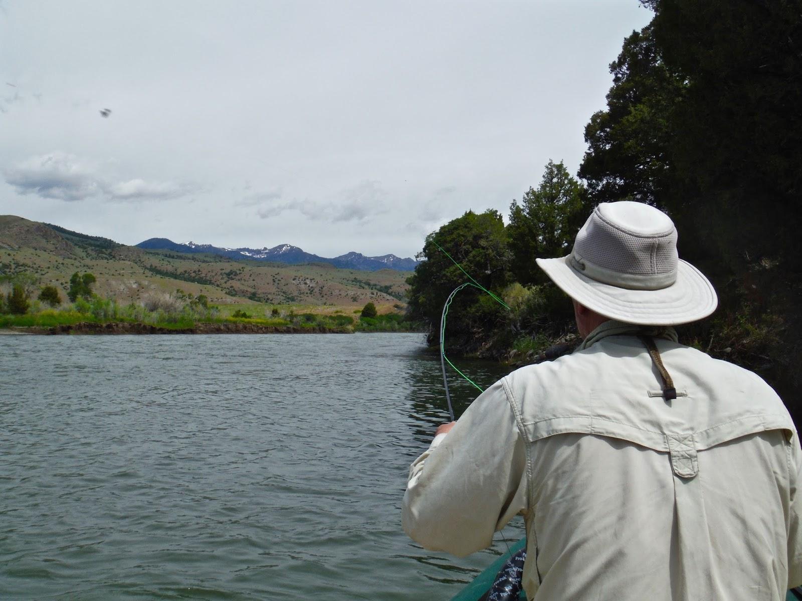 Erik s fly fishing blog yellowstone river salmon fly hatch for Fly fishing yellowstone