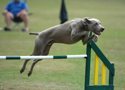 agility-dog-training-ideas