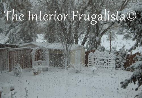 Winter back yard