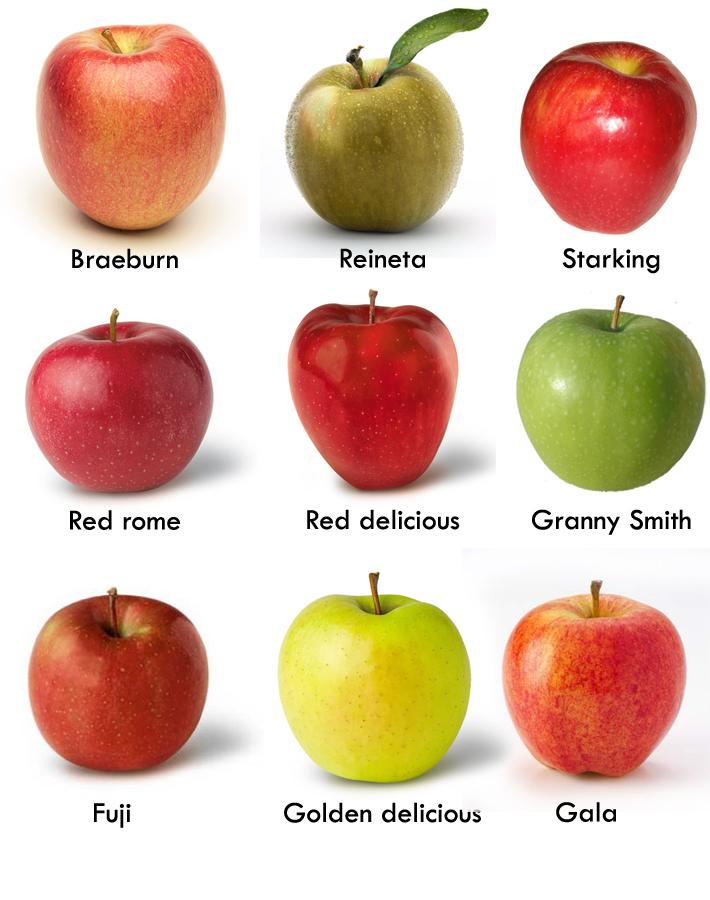 la mar de verde: el manzano arboles frutales en maceta