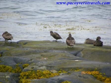 visita a perlan y a la playa de nautholsvik