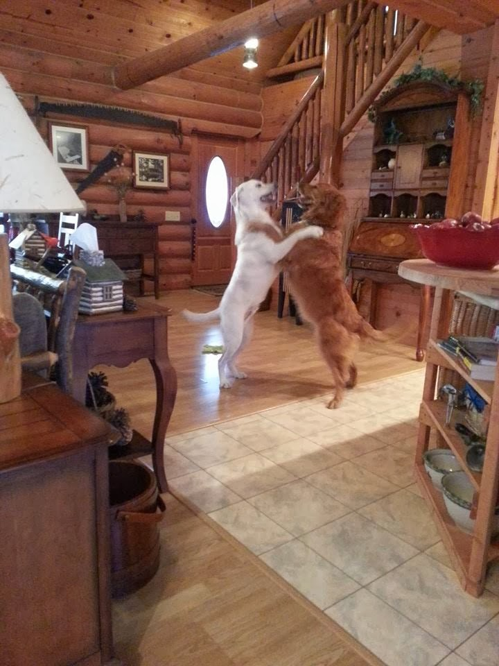 Cute dogs - part 8 (50 pics), two dogs dancing like people