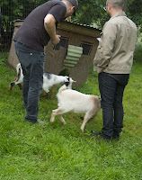 Wealth Underground Farm Torche goats