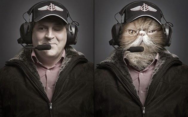 Transplants-Cats-Faces-2