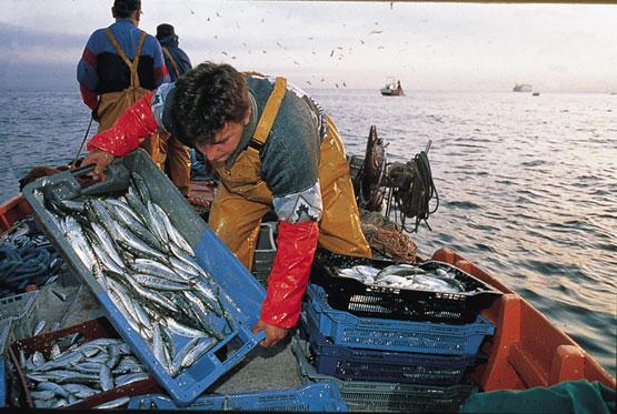 La pesca como potencialidad turística
