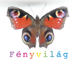 Fnyvilg
