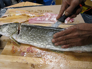 A Fish Being Filleted