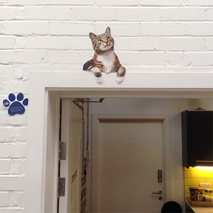 Lifesize cat hiding above door frame