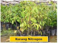 kurang nitrogen