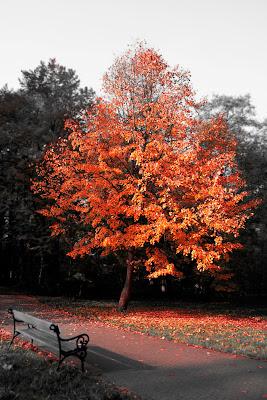 drzewko czerwone