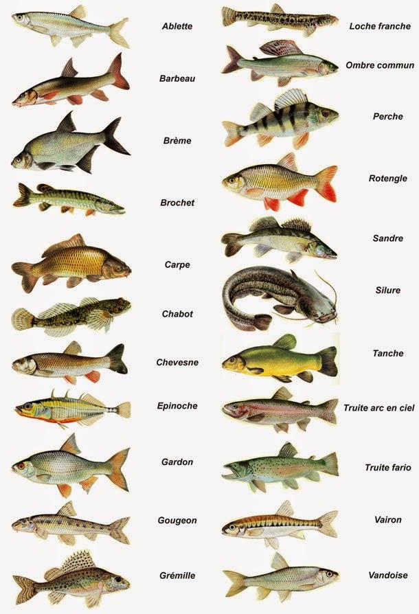 La chasse et la pêche le coin