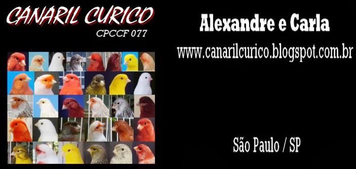 Canaril Curico - Canário de Cor