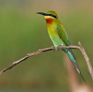 Burung dan Perkembanganya