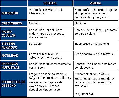 El aparato digestivo y las generalidades de la c lula - Informacion sobre la fibra vegetal ...