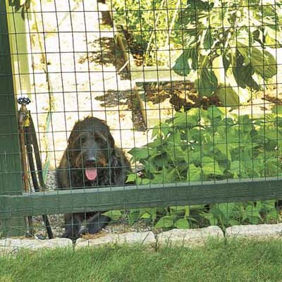 And Here Is A Photo Of The Metal Fencing Used Around The Garden. They  Credit The Dog With Keeping The Deer Out. Youu0027ll Need A 6 To 8 Foot Fence  To Keep ...