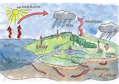 GrönaHestarsompratar: Vattnets kretslopp
