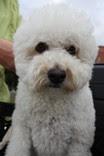Vårdhunden Rasmus