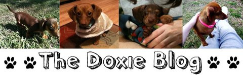 The Doxie Blog