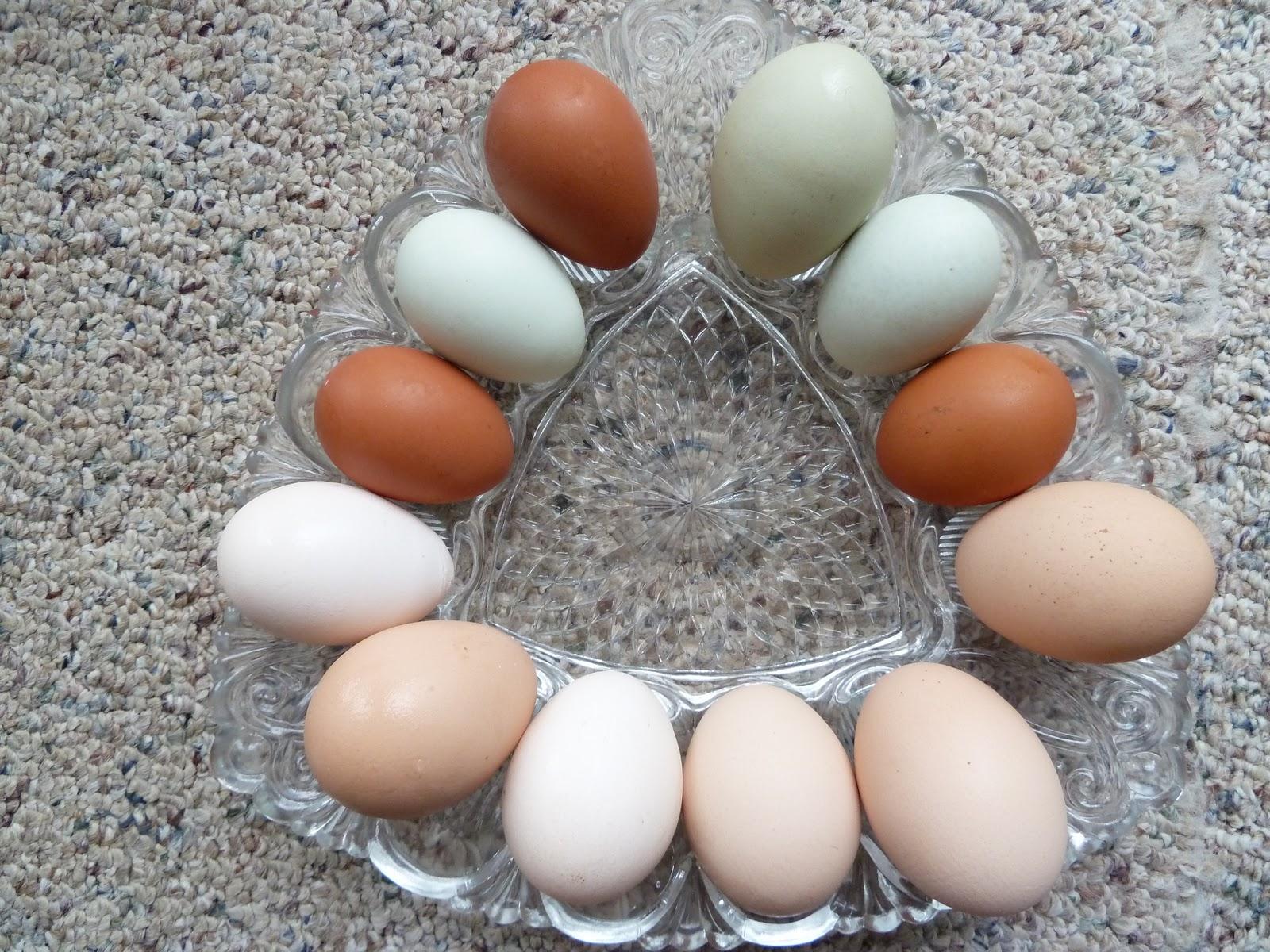 Гнезда для кур несушек своими руками: 3 лучших варианта 19