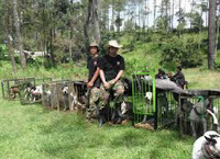 Adu bagong ( anjing vs babi hutan )