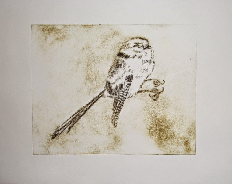 drypoint print long-tailed tit bird study
