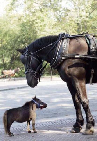 Cavalo e cavalinho